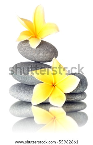 Yellow flowers on stacked stones - isolated on white