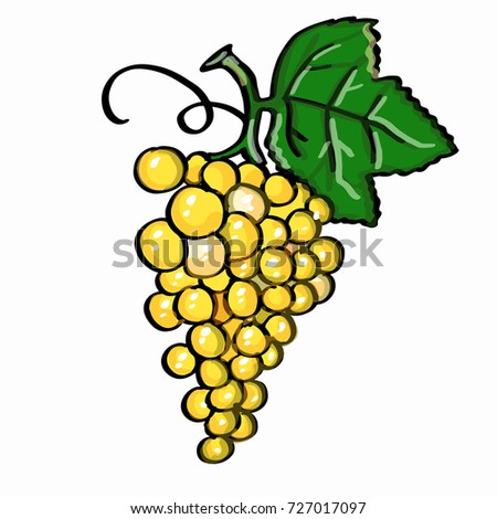 yellow grape  and white background  Stok fotoğraf ©