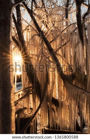 yellow ice curtain #1365800588