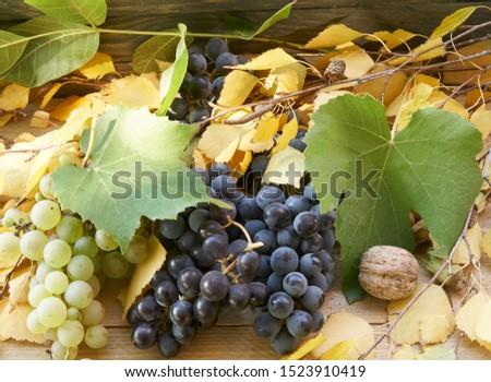 yellow leaves,grape leaves, grape, walnut, birch leaves,