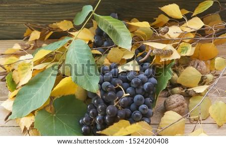 yellow leaves,grape leaves, grape, walnut,birch leaves,