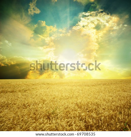 Yellow meadow under blue sky with clouds #69708535