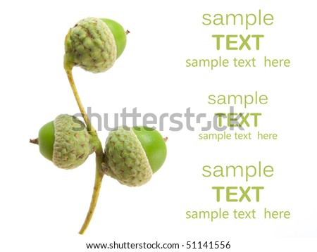young acorns on white background. with room for text