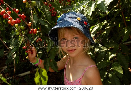 """Young girl holding a branch of a coffee plant, Hawaii, (Keith Levit)"""