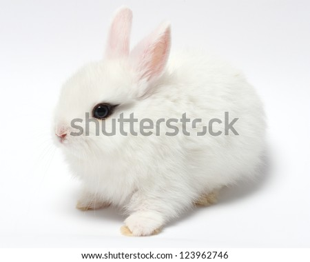 young white rabbit isolated on white