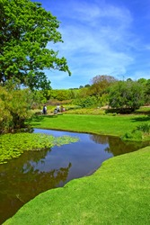 'Zigzag' - composition of lake and meadow. Shot in the Kirstenbosch Botanical Garden, suburb of Cape Town, Western Cape, South Africa.