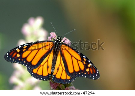 나비 - stock photo