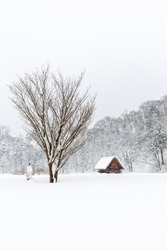 A abandoned house and leafless tree with snowing in winter season