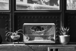 A abandoned transistor radio out of order can't play Oldies Hit songs  anymore