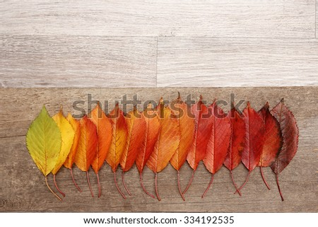 a Autumn leaves frame background