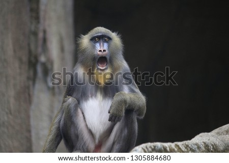 a baboon was shocked at the photo