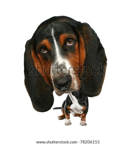 a baby bobblehead  basset hound - stock photo