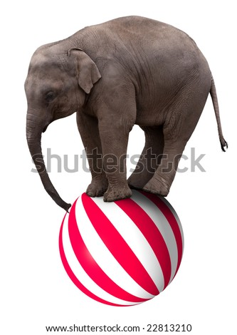 A baby circus elephant balancing on a big ball - stock photo