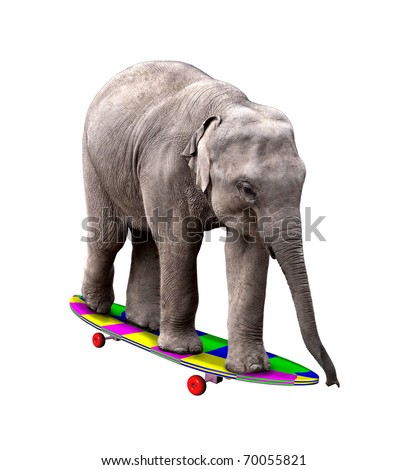 A baby elephant having fun on a brightly colored skateboard. Isolated on white.