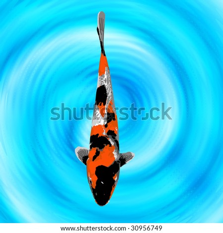 A baby orange black and white koi swimming quietly in a for Orange and black koi
