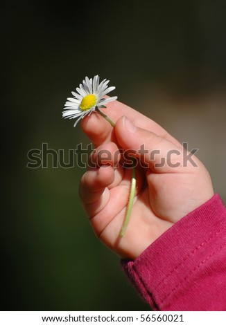 A Baby's hand holding a daisy . - stock photo