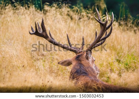 A back view of A Buck resting after a long journey  #1503032453