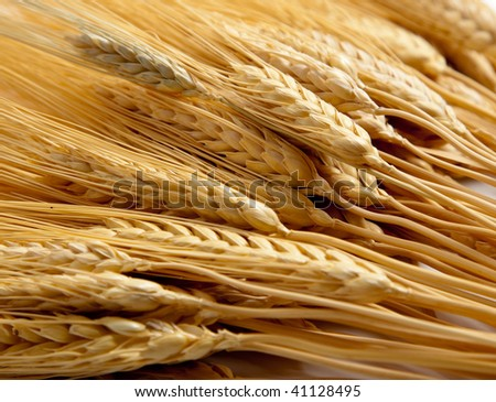 a background comprised of golden shocks of wheat
