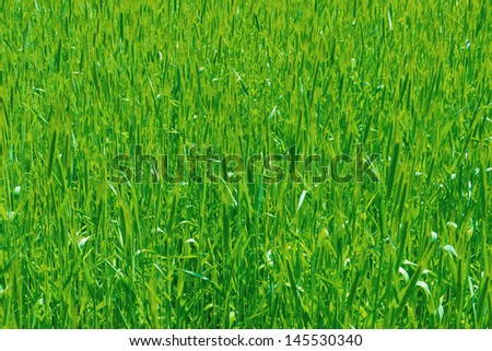 A background image of green field #145530340