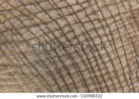 A background of elephant skin close up, showing the construction, texture, wrinkles and skin detail.  #550988332