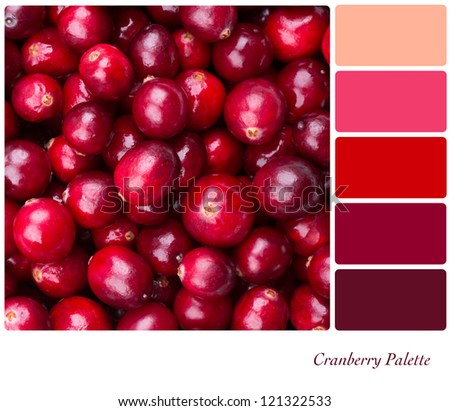 A background of fresh, juicy cranberries. Colour palette with complimentary colour swatches