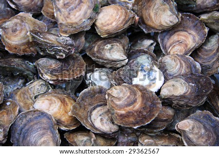 A background of fresh oysters for sale at a fish market