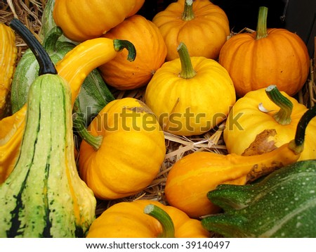 A background of pumpkins, squashes and gourds for sale at a market