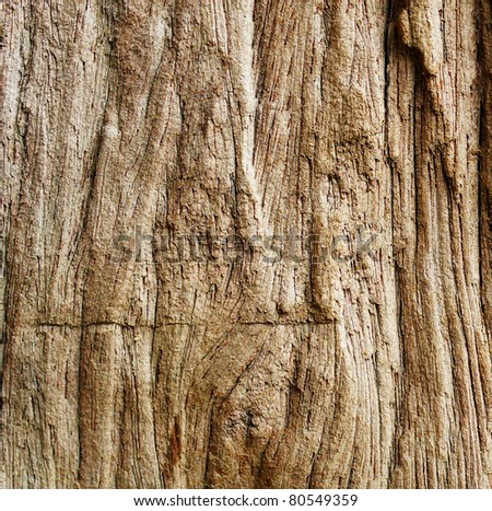 a background of wood closeup the tree bark texture rain picture old wall