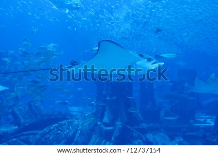 A background picture of group of fish and stingrays swim in blue ocean at aquarium.