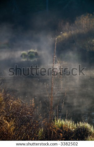 A backlighted spider web on a foggy morning