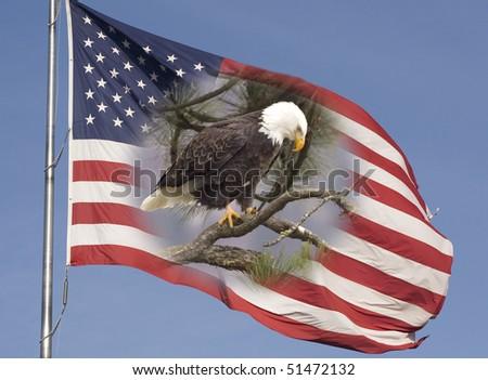 Freedom in america essay