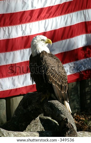 A bald eagle in front of an American flag.