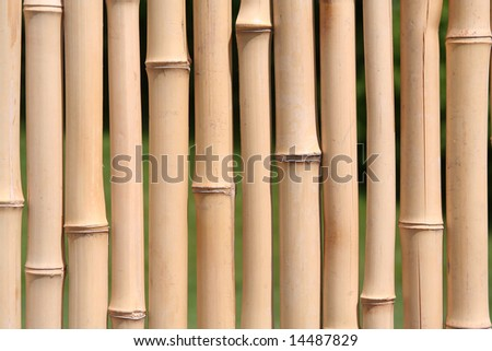 A Bamboo Wall