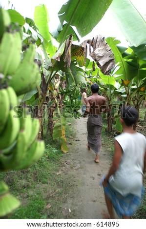 A banana plantation in Bangladesh - stock photo