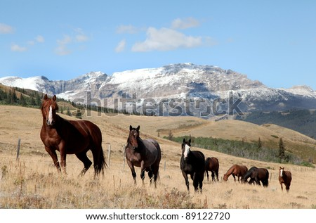 A band of horses near Glacier National Park