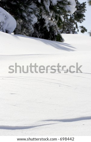 A bank of deep snow up against a line of pine trees.