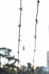 A barbwire in Sydney with the Westfield tower in the background