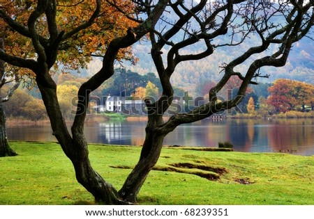 A bare tree and a house on the shore of Derwentwater in the English Lake District