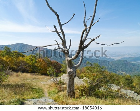 A bare tree frames this landscape in Shenandoah National Park in West Virginia.