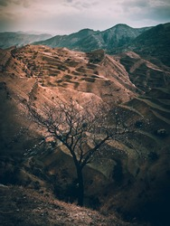 A bare tree on a rock. Vintage toning. Vertical view.