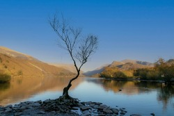 A bare tree on the LLyn Padarn lake at Llanberis in the Snowdonia area of North Wales UK