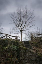 A bare tree on the remains of a ruined medieval castle on a winter day.
