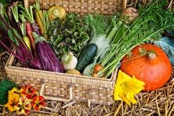 A basket full of forgotten vegetables.