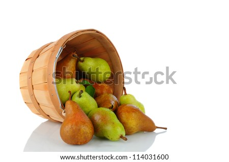 A basket full of fresh picked Bartlett and Bosc Pears on it s side spilling onto the surface. Horizontal format over a white background with reflection.