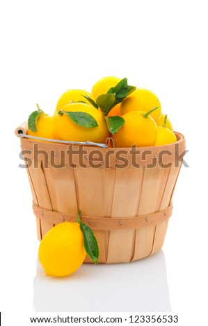 A basket full of fresh picked lemons isolated on a white background. Vertical format.