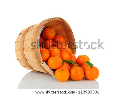 A basket of Clementine Mandarin Oranges tipped on its side with fruit spilling onto the surface. Vertical format over a white background with reflection.