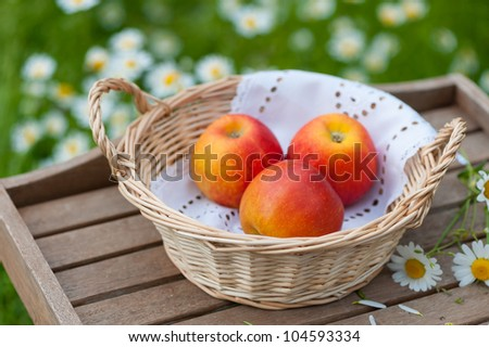 A basket with apples on a garden table. In the background a green meadow with daisies.