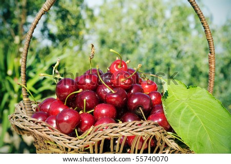 a basket with cherries on a rural scene