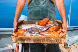 A basket with fresh fishes, on fisherman boat, Crete, Greece.