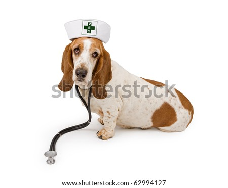 A Basset Hound dog wearing a nurse hat that has a modified first aid symbol that says Vet on it and a stethoscope. Isolated on white.